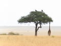 Kenia-586-bewerkt