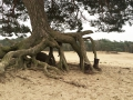 boom met laars